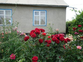 Rosen Haus
