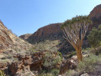 Köcherbaumschlucht, Namibia
