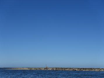 Robben, Meer, Namibia