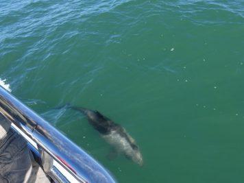 Delfin, Meer, Namibia