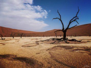 Namibia, Sossus Vlei, Nationalpark