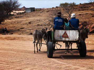 Namibia, Eselkarren, Damara,